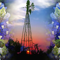 Bluebonnets And Windmill by Stephen Anderson