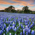 Bluebonnets On A Spring Evening 403-1 by Rob Greebon