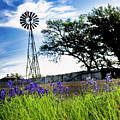 Bluebonnets With Windmill by Fred Adsit