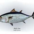 Bluefin Tuna by Ralph Martens