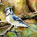 Bluejay by Anna  Katherine
