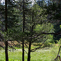 Bluff Lake Ca Through The Trees 8 by Chris Brannen