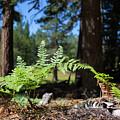Bluff Lake Forest Foliage1 by Chris Brannen