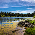 Bluff Lake  by Janet Aguila Krause