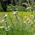 Bluff Lake Wild Flowers 1 by Chris Brannen