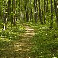 Bluff Trail Awenda Provincial Park by Elaine Mikkelstrup