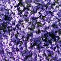 Bluish Carpet by Jasna Dragun
