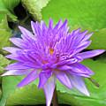 Blumen Des Wassers - Flowers Of The Water 17 by Pamela Critchlow