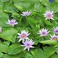 Blumen Des Wassers - Flowers Of The Water 22 by Pamela Critchlow
