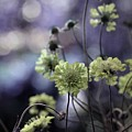 A Meadow's Blur Of Nature by Gothicrow Images