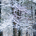 Blurred Shot Of Snow-covered Trees by Tim Laman
