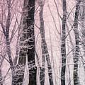 Blush Of Dawn Il by Susan Maxwell Schmidt