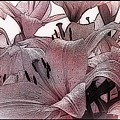 Blushing Lilies by Elizabeth McTaggart