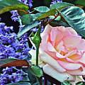 Blushing Rose by Janis Nussbaum Senungetuk