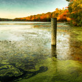 Blydenberg Park In The Fall by Alissa Beth Photography