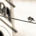 Bnw Bird - San Salvador I by Totto Ponce