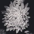 Bnw Flora by Aly Robinson