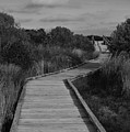 Boardwalk At Talbot Island by Spencer Studios