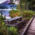 Boardwalk At Trillium Lake by Cat Connor