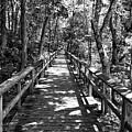 Boardwalk B by John Myers