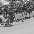 Boardwalk Climbing A Hill by Sue Smith