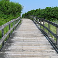 Boardwalk by Colleen Kammerer