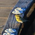 Boardwalk Inspector by Craig Corwin