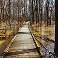 Boardwalk Over Golden Brown Iced Pond by Debbie Oppermann