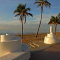 Boardwalk Palms by Zachary Liaros