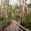 Boardwalk Through Corkscrew Swamp by Barbara Bowen