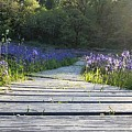Boardwalk Through The Flowers by Brian Eberly