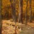 Boardwalk Through The Woods by Robert Kinser