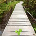 Boardwalk To Backguard Falls In British Columbia by Mark Duffy