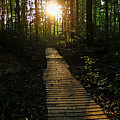 Boardwalk To The Sun by Debbie Oppermann