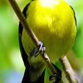 Boastful Bird by Karen Wiles