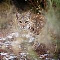 Bob On The Prowl by Kristi Johnson