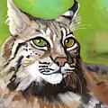 Bobcat Katta by Marie Clark