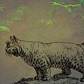 Bobcat by Movie Poster Prints