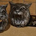 Bobcat by Tim  Joyner