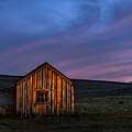 Bodie At Sunset by Cat Connor