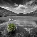Bog Cotton On Blue Lough by Nigel R Bell