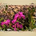 Bog Laurel Flowers by Sherman Perry