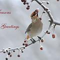 Bohemian Seasons Greetings by Deborah Benoit