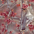 Bohemian Waxwing 2 by Victoria  Dauphinee