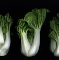 Bok Choy by Christian Slanec