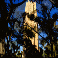 Bok Tower by David Lee Thompson