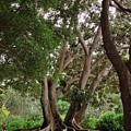Bold Branches by Amanda Vouglas