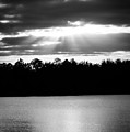 Bold Rays Monochrome by Parker Cunningham