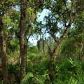Bon Secour Trail by Joseph Rainey