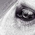 Bonbon's Eye by Alice Gipson
